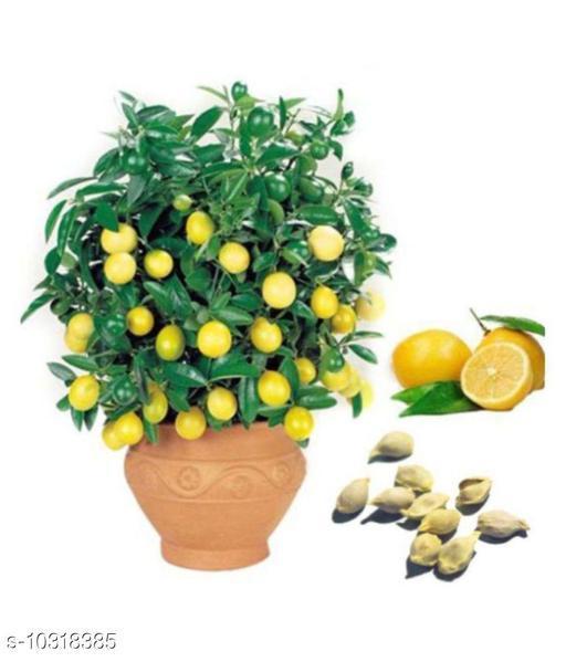 Lemon Tree Seeds Fruit Seed Home Garden Indoor Outdoor Dwarf Plant 10 Seeds