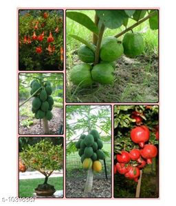 Fruit Seeds Combo Pack: Dwarf Guava,Pomegranate,Papaya Seeds