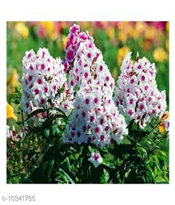 Perennial phlox Winter Flower Seeds with Coco Peat Seed Starter