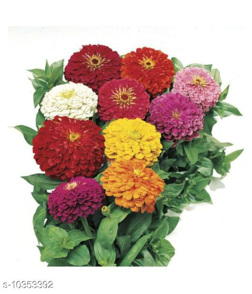 Attractive Zinnia Mix Color Flower Plant Seeds