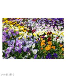 Outsidepride Pansy Black Mix Color Winter Flower Seeds with Coco Peat Seed Starter