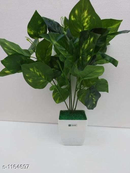 Indoor Plants Classy Flower Plant Material : Melamine & Plastic Size: Free Size Description : It Has 1 Piece Of Artificial Flower Plant Sizes Available: Free Size *Proof of Safe Delivery! Click to know on Safety Standards of Delivery Partners- https://ltl.sh/y_nZrAV3  Catalog Rating: ★3.6 (48)  Catalog Name: Classy Artificial Flower Plant Vol 1 CatalogID_145229 C133-SC1606 Code: 454-1164697-