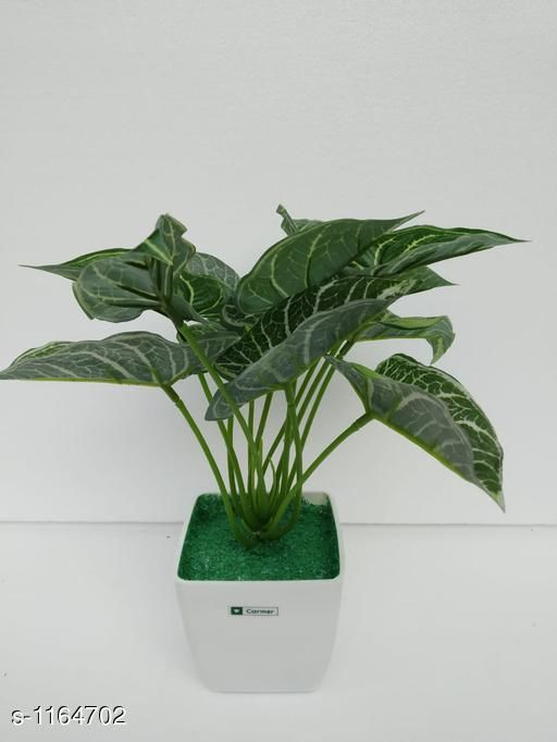 Indoor Plants Classy Flower Plant Material : Melamine & Plastic Size: Free Size Description : It Has 1 Piece Of Artificial Flower Plant Country of Origin: India Sizes Available: Free Size *Proof of Safe Delivery! Click to know on Safety Standards of Delivery Partners- https://ltl.sh/y_nZrAV3  Catalog Rating: ★3.6 (48)  Catalog Name: Classy Artificial Flower Plant Vol 1 CatalogID_145229 C133-SC1606 Code: 454-1164702-