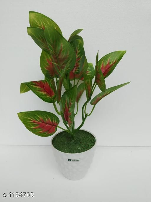 Indoor Plants Classy Flower Plant Material : Melamine & Plastic Size: Free Size Description : It Has 1 Piece Of Artificial Flower Plant Country of Origin: India Sizes Available: Free Size *Proof of Safe Delivery! Click to know on Safety Standards of Delivery Partners- https://ltl.sh/y_nZrAV3  Catalog Rating: ★3.6 (48)  Catalog Name: Classy Artificial Flower Plant Vol 1 CatalogID_145229 C133-SC1606 Code: 454-1164709-
