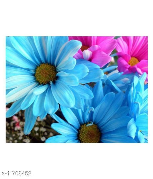 Windsor Blue Daisy multicolor Winter Flower Seeds with Coco Peat Seed Starter