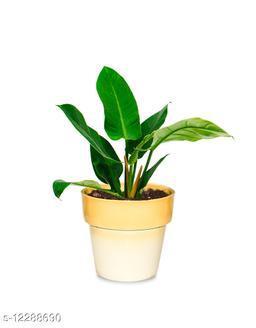 Greenium Foliage Plant Philodendron Xanadu Martiana in Yellow Pastel Elegance Pot