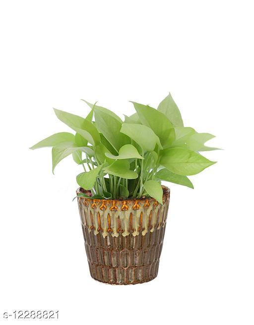 Greenium Foliage Golden Money Plant In Brown Edgy Origami Pot