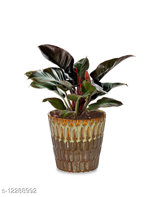 Greenium Foliage Plant Philodendron Imperial Red in Brown Edgy Origami Pot