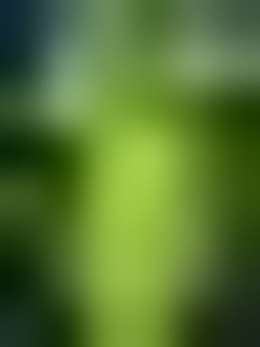 Garden Pump Pressure Sprayer|Lawn Sprinkler|Water Mister|Spray Bottle for Herbicides, Pesticides, Fertilizers, Plants Flowers 2 Liter Capacity 2 L Hand Held Sprayer (Pack of 1) (color may vary)