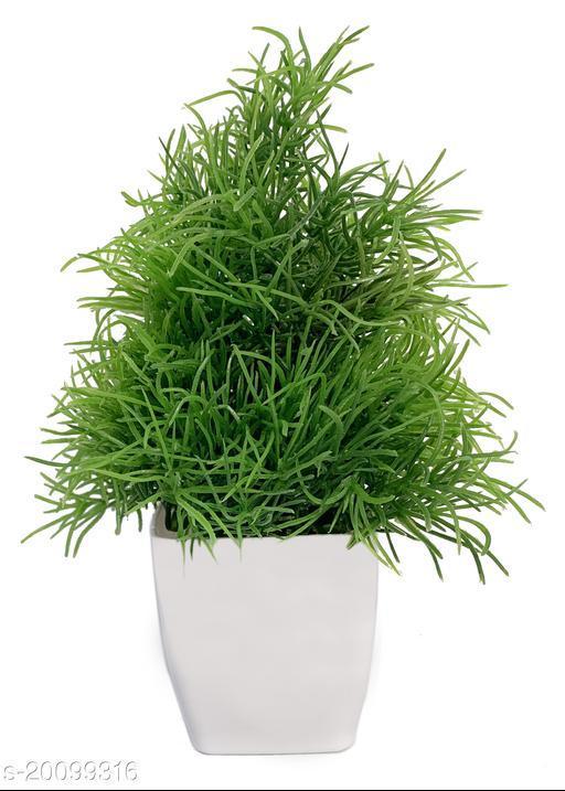 Trendy Plants with Pots