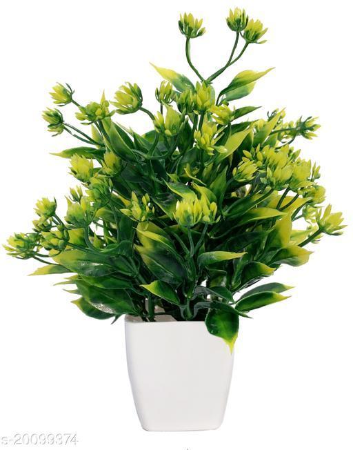 Wonderful Plants with Pots