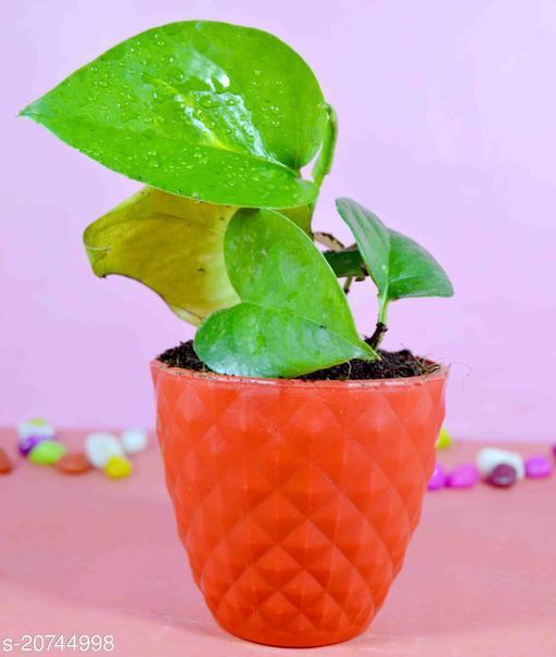 Fancy Indoor Plants