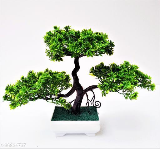 Unique Plants with Pots