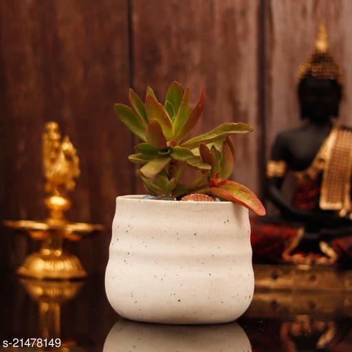 Lasaki PL99 White Matte Ceramic Pot for Indoor Plants