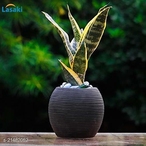 Lasaki Globe Black Ceramic Pot for Indoor Plants