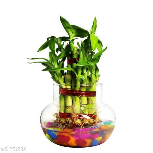 Unique Indoor Plants
