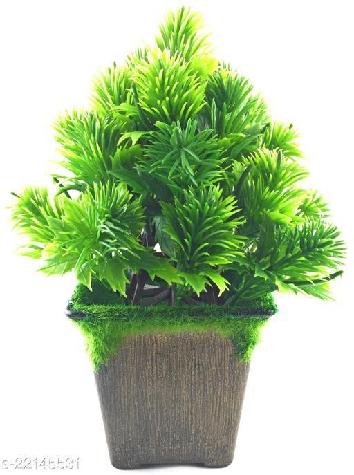 Attractive Indoor Plants