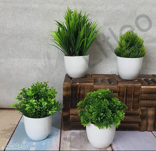 Stylo Plants