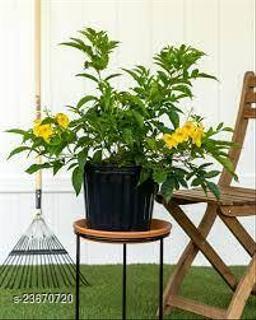 Classic Indoor Plants
