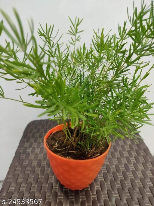 Modern Indoor Plants