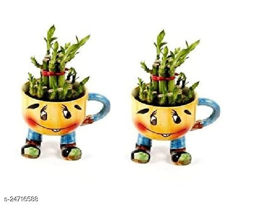 2 Layer Lucky Bamboo Plants  with Pot Set of 2 PCS