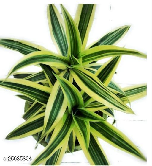 Essential Indoor Plants