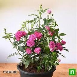 Latest Indoor Plants