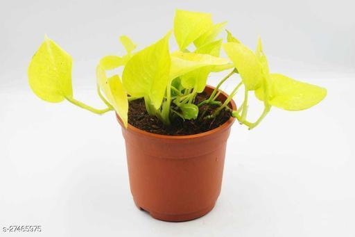 Classy Indoor Plants