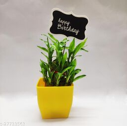 Two Layer Bamboo with birthday tag