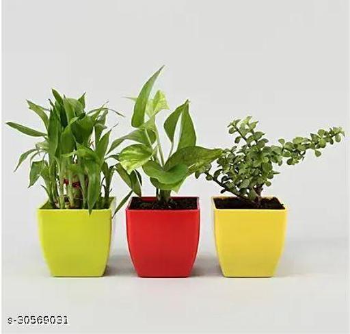 Plant Three combo set