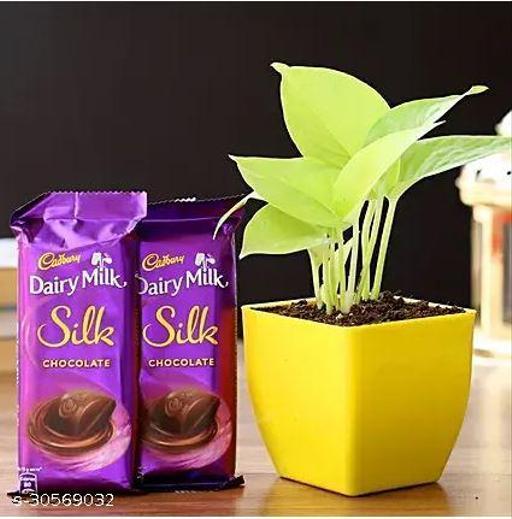Money Plant & Two Dairy Milk Silk Chocolates