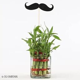 Father's Day Special Two layer Bamboo Plant