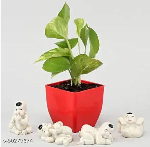 Money Plant With Baby Buddha Miniatures