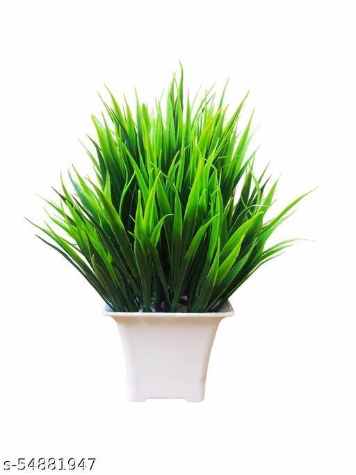 Attractive Plant