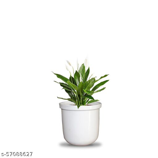 VJH Peace Lily Plant with Fiber Pot (Gett 16)