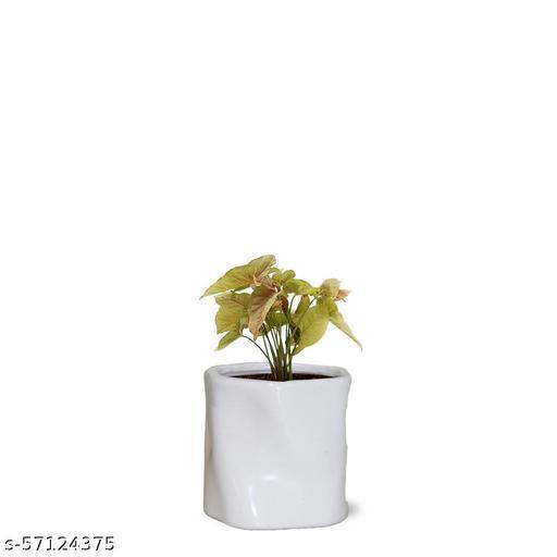 VJH Syngonium Plant with Fiber Pot (Gett 17)