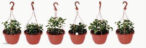Pots & planters PLANT POT  *Material* Plastic  *Pack* Multipack  *Sizes Available* Free Size *    Catalog Name: Modern Pots & Planters CatalogID_1313857 C133-SC1607 Code: 385-7972313-