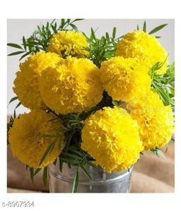 YELLOW AFRICAN MARIGOLD Winter Flower Seeds with Coco Peat Seed Starter
