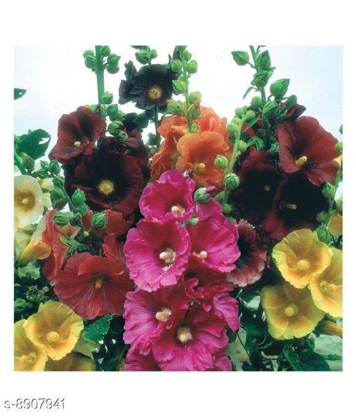 Hollyhock Alcea Flower Seeds