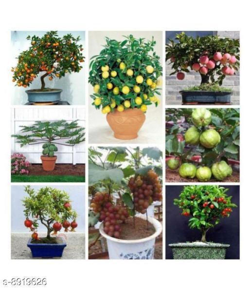 Garden Bonsai Suitable Fruit Seeds Mega Combo (Apple, Orange, Lemon, Guava, Cherry, Grapes, Papaya, Pomegranate)